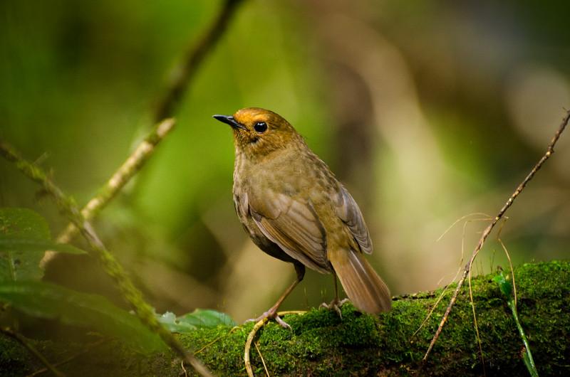 A cute little bird.
