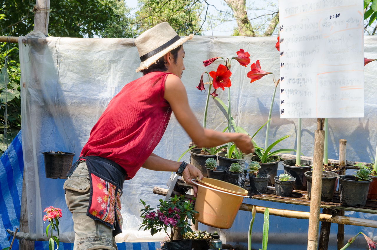This man is growing Amaryllis and succulents to sell.