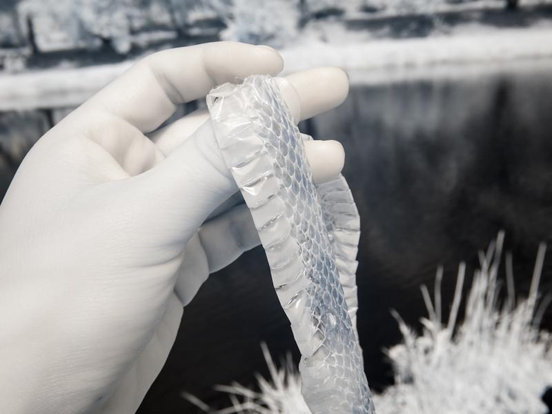 A snakeskin!