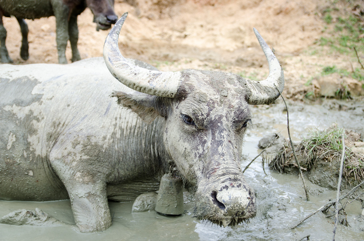 Who doesn't like a mud bath on a hot day?