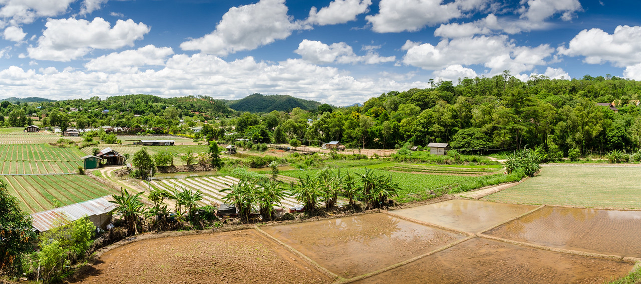 Farms and rice paddies, Chiang Mai Province. Higher in the hills, where it is a bit cooler, the rice was already planted.