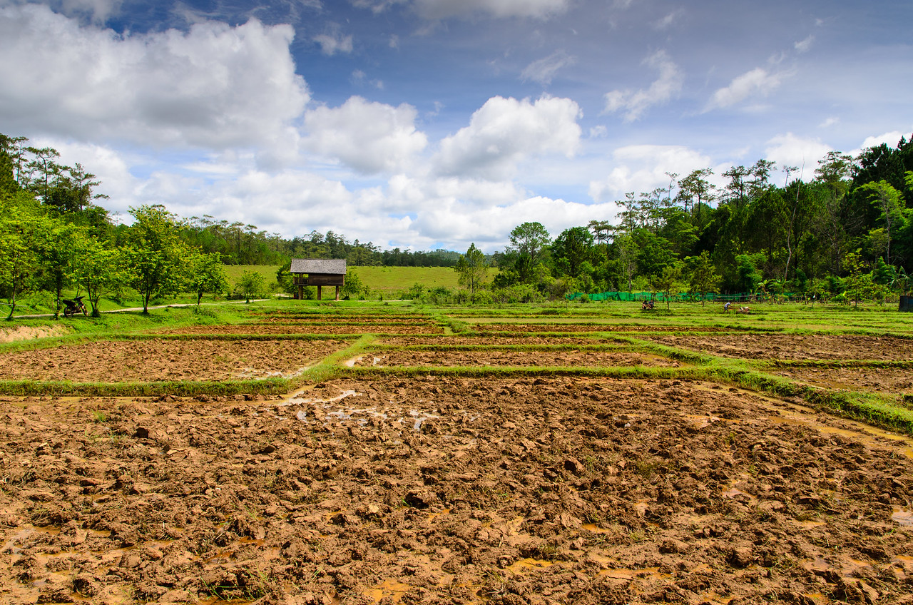 Rice paddies almost ready for planting.