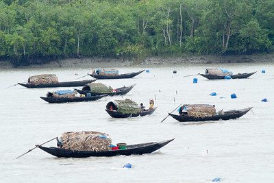 Fishing boats in Sundarban region of Bangladesh