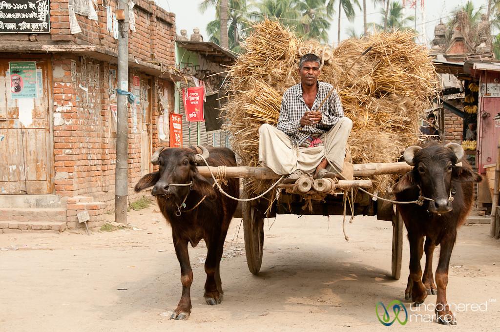 Water Buffalo Cart - Puthia, Bangladesh