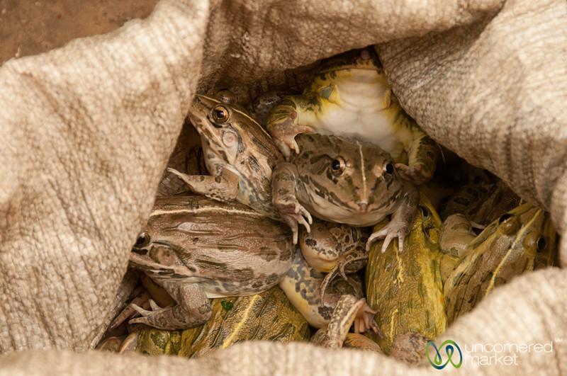 Frogs in a Sack - Bandarban Indigenous Market, Bangladesh