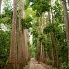Bicycling Through Lawachara National Park - Bangladesh