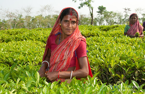Tea Picker Outside of Srimongal, Bangaldesh