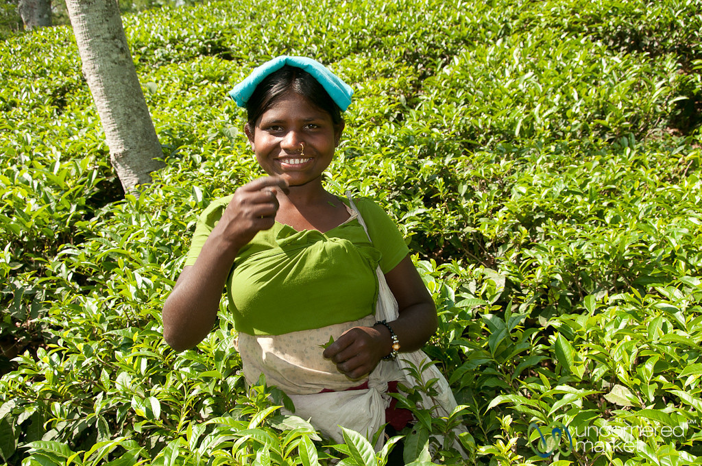 Laughing Tea Picker - Outside Srimongal, Bangladesh