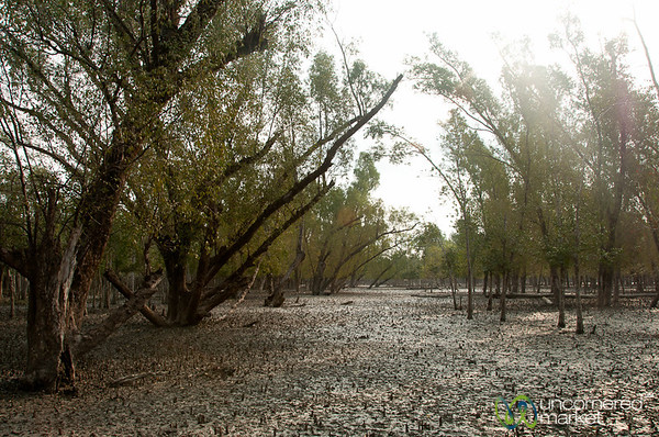 Mangrove Forest and Mud - Sundarbans, Bangladesh