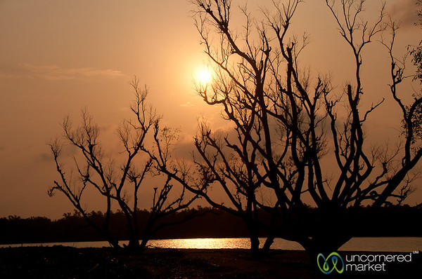 Sunrise Through Trees - Sundarbans, Bangladesh