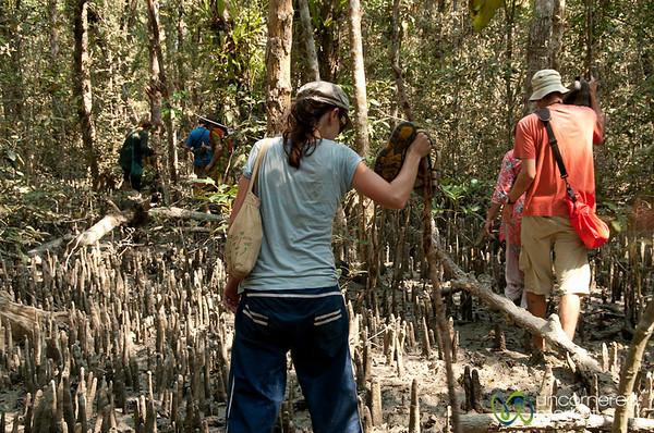Walking Through Mangrove Forest - Sundarbans, Bangladesh