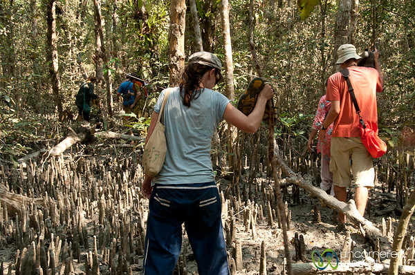 Walking Through Mangrove Forest - Sundarbans, Bangladesh