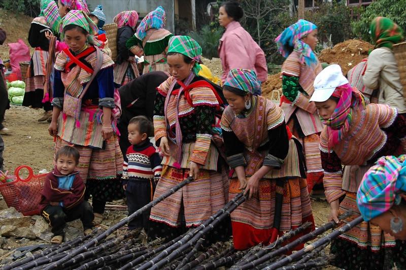 Sugar Cane Stalks - Bac Ha, Vietnam