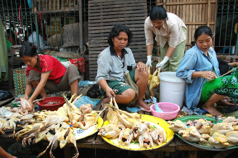 Chickens for Sale - Battambang, Cambodia