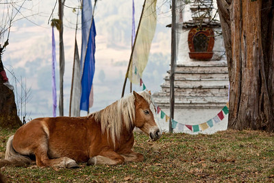 Horses are an important mode of transport still.  There were no paved roads in Bhutan before 1959.