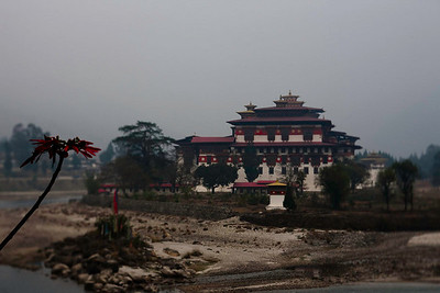 The Punaka Dzong in the early morning light