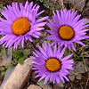 Bh 2080 Aster asteroides