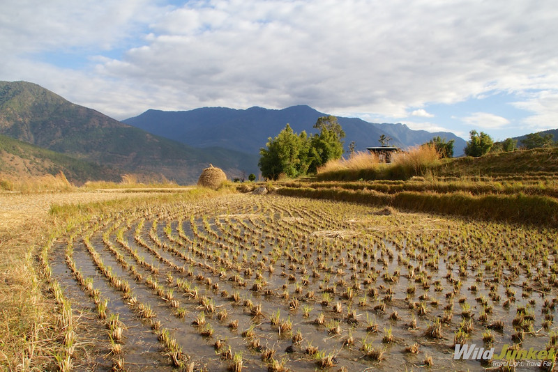 Hiking through the rice terraces of Punakha