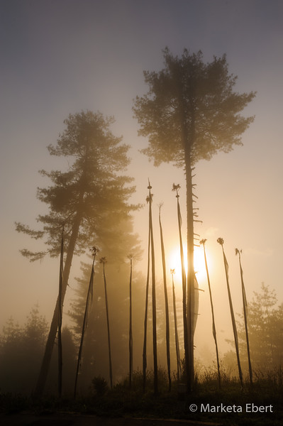 Sunrise with prayer flags