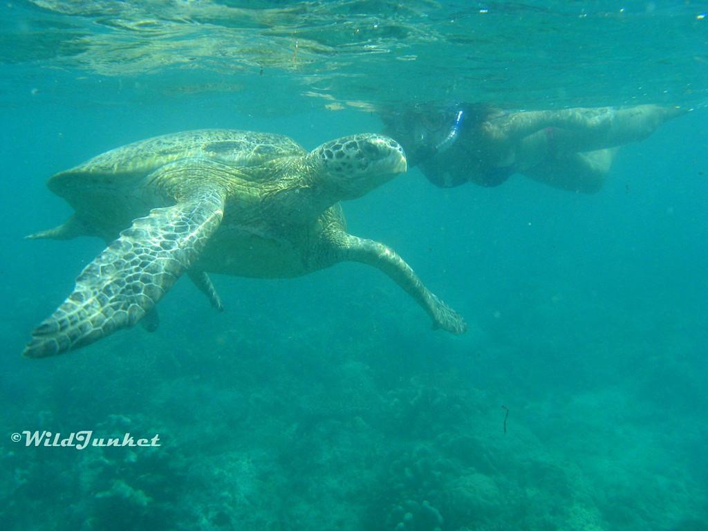 Why you should travel Malaysia - Sipadan