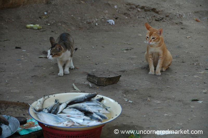 Cats Eyeing the Fish - Bagan, Burma
