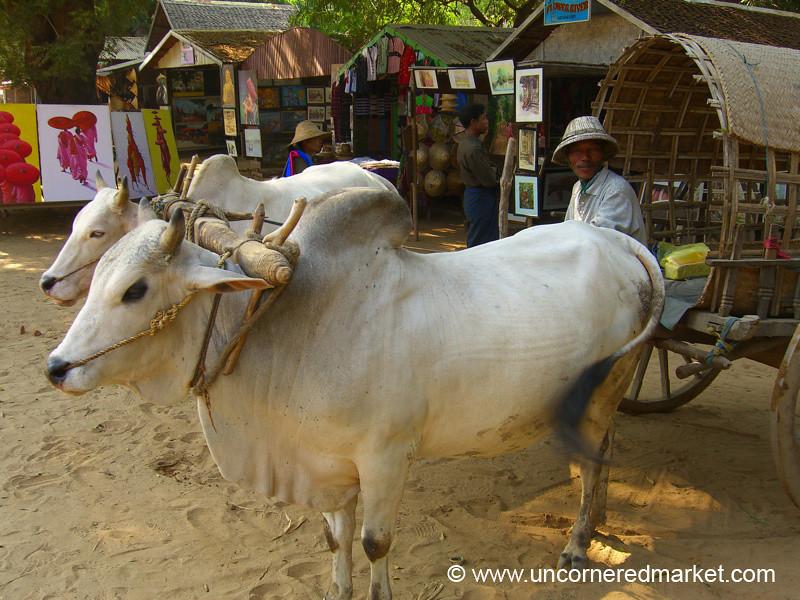Ox Cart and Driver - Mingun, Burma