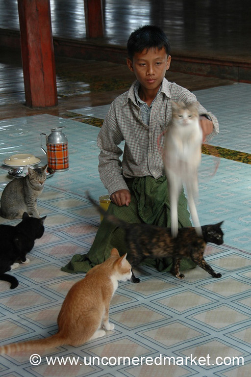 Jumping Cat Show at Monastery - Inle Lake, Burma