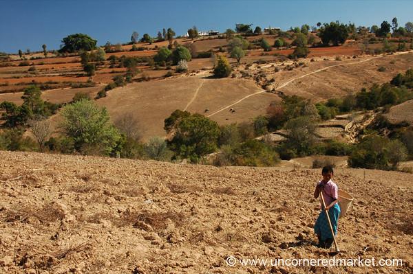 Looking for Ginger - Inle Lake, Burma