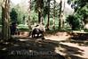 Siem Reap - Angkor Thom - Elephant Ride