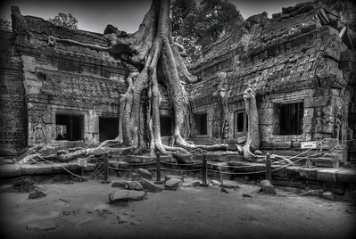 Isolated shot of Ta Prohm