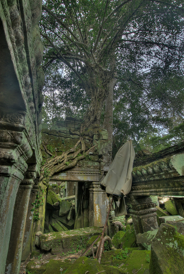 Ruins at Ta Prohm inside the Angkor Wat complex