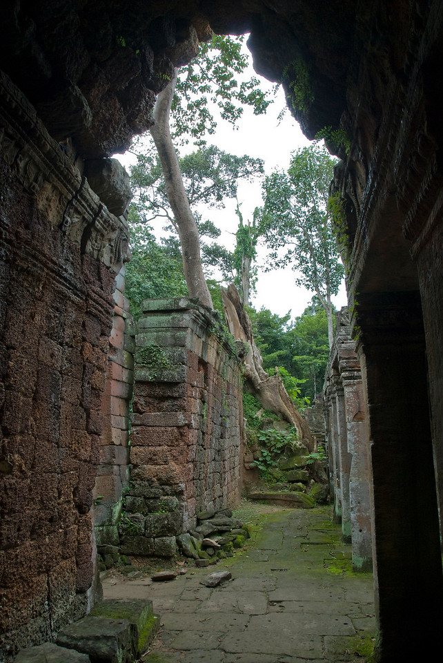 Tree at the end of the wall inside the Angkor Wat temple ruins