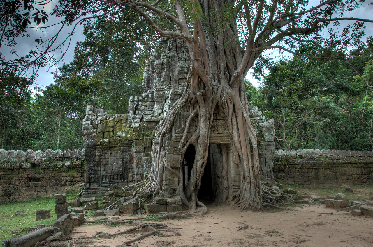 Tree atop a doorway in Ta Som, Cambodia