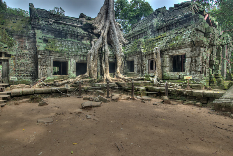 Tree roots crawling on ruins of Ta Prohm
