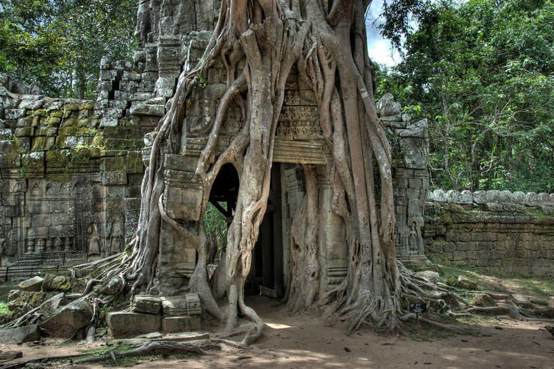 Large tree roots covering the doorway on the back of Ta Som