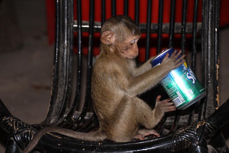 Monkey - Battambang - Intrepid Travel Cambodia - Review: Cambodian Traveler