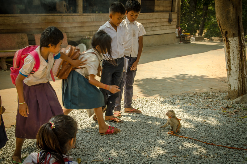 I felt bad for this poor little monkey.