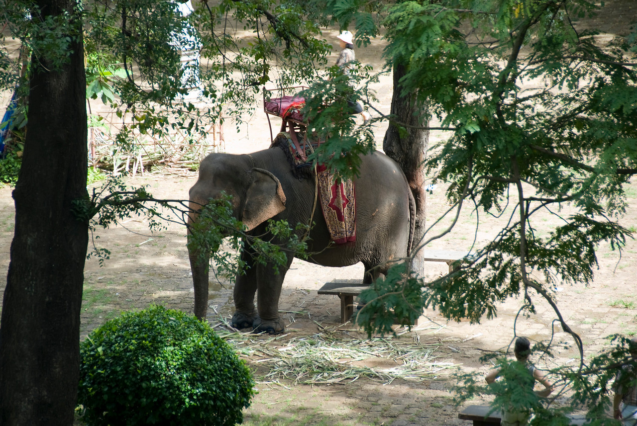 Shot of an elephant in Wat Phnom in Phnom Penh, Cambodia