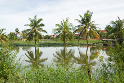 Palm trees reflected on a pond in Phnom Penh, Cambodia
