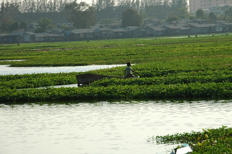 Plying the Water and Weeds - Phnom Penh, Cambodia