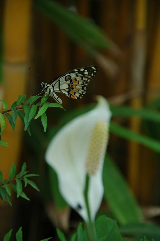 Butterfly on a Leaf - Siem Reap, Cambodia