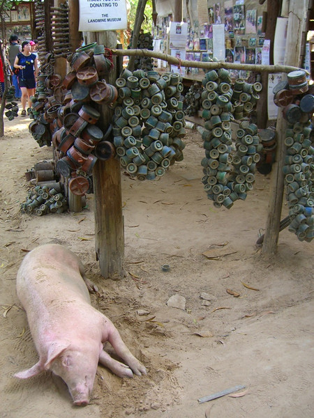 Sleeping Pig - Siem Reap, Cambodia