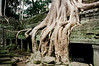Siem Reap - Ta Prohm - Tree on Ruins