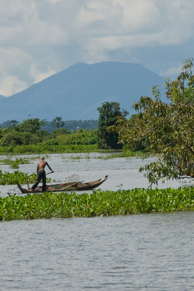 Man navigating a boat near mangroves in Tonle Sap