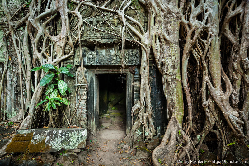 Ancient stone door and tree roots, Ta Prohm temple, Angkor, Cambodia