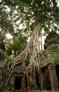 Ruins of Ta Prohm
