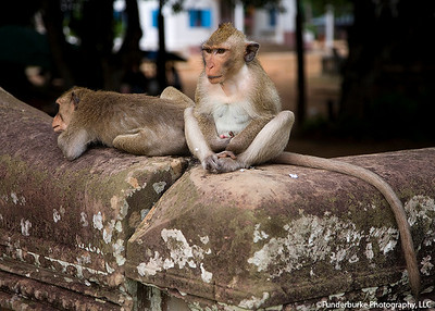 Monkeys near Angkor Wat