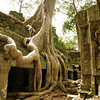 The ruins of Ta Prohm overtaken by nature.