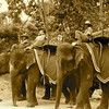 These elephants were available for travelers who needed a ride up a hill to the temple of Phnom Bakheng.