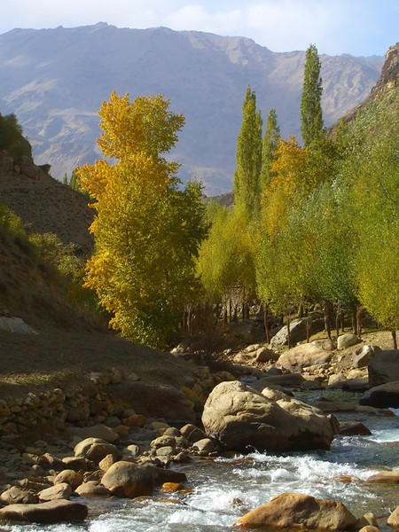 Stream, Trees, Mountains - Pamir Mountains, Tajikistan